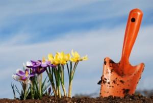 Növények otthon, házi készítésű tápoldattal